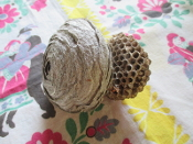 Wasp Nest Piece-Better Business, Fidelity, and Hex Breaking
