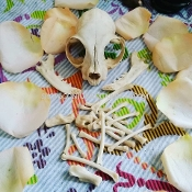 Black Cat Bone-Luck, Gambling, Returns Lovers, Money, Healing